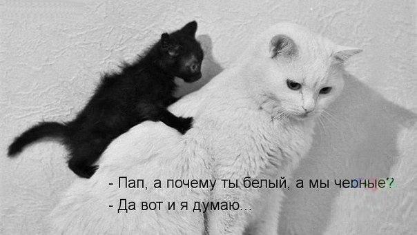 Смотреть смешные картинки с котами и надписями бесплатно 11