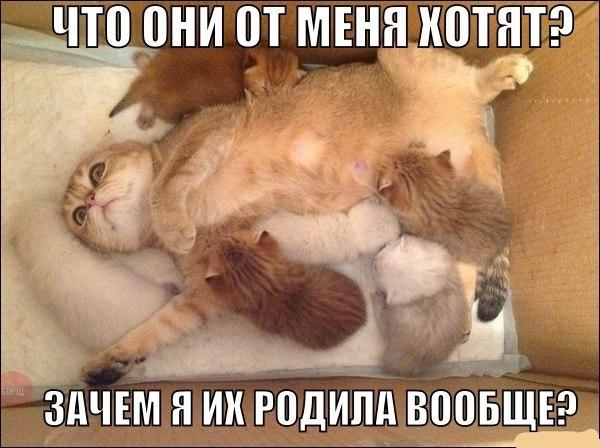 Смотреть смешные картинки с котами и надписями бесплатно 13