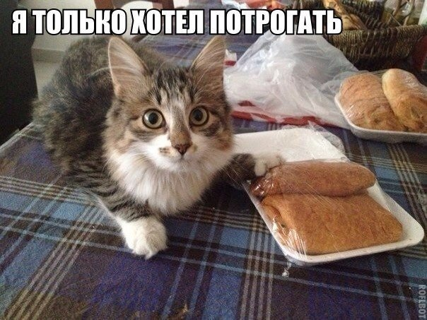Смотреть смешные картинки с котами и надписями бесплатно 14