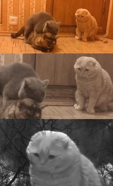 Смотреть смешные картинки с котами и надписями бесплатно 15