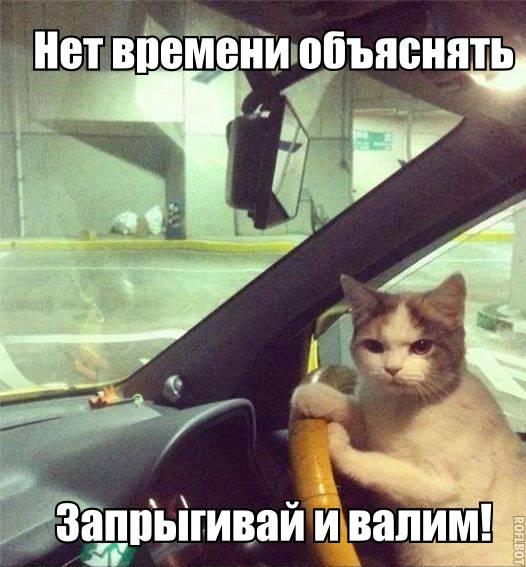 Смотреть смешные картинки с котами и надписями бесплатно 17