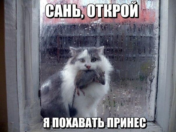 Смотреть смешные картинки с котами и надписями бесплатно 19