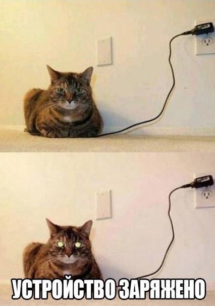 Смотреть смешные картинки с котами и надписями бесплатно 2