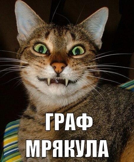 Смотреть смешные картинки с котами и надписями бесплатно 3