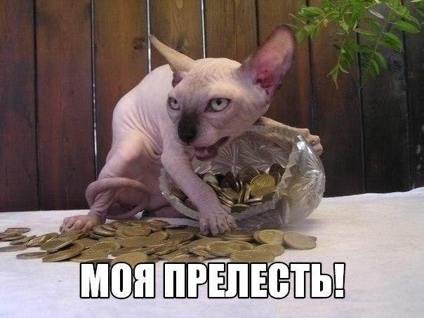 Смотреть смешные картинки с котами и надписями бесплатно 4