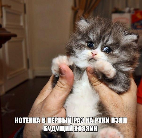 Смотреть смешные картинки с котами и надписями бесплатно 5