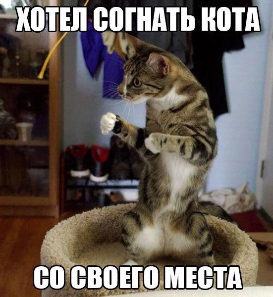 Смотреть смешные картинки с котами и надписями бесплатно 6