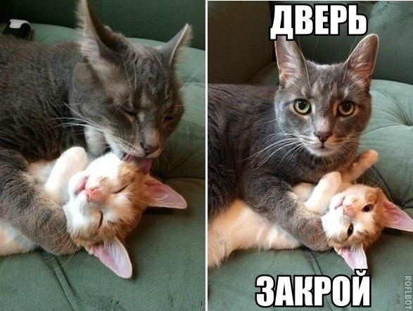 Смотреть смешные картинки с котами и надписями бесплатно 7