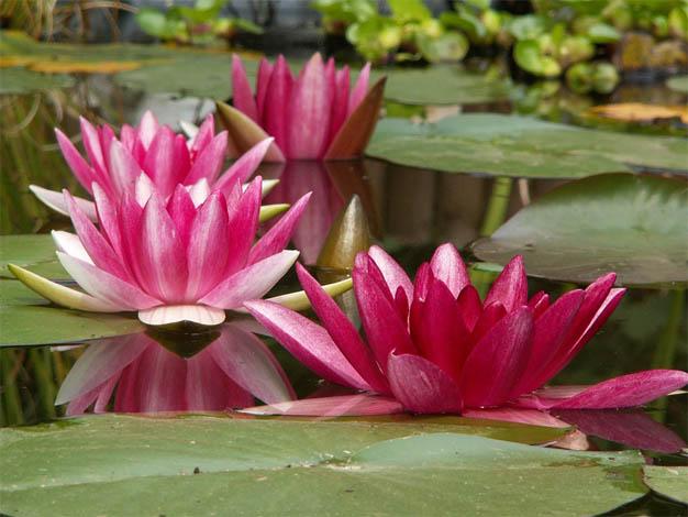 Удивительные растения - фото, картинки, красивые, интересные 10