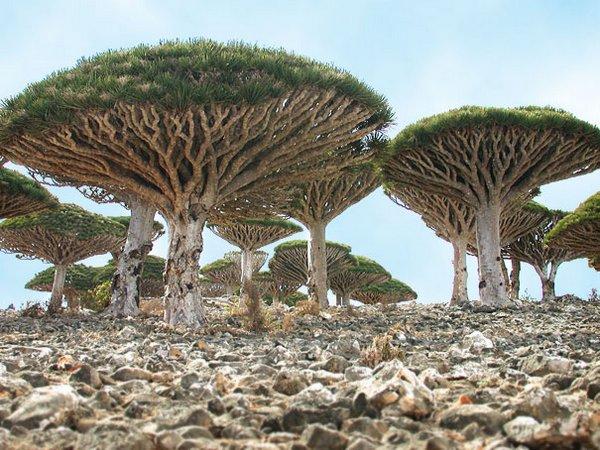 Удивительные растения - фото, картинки, красивые, интересные 11