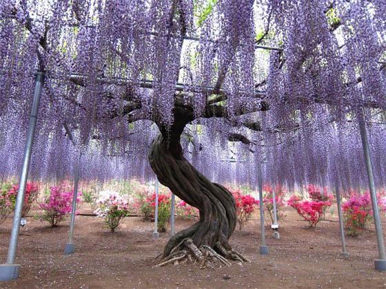 Удивительные растения - фото, картинки, красивые, интересные 13