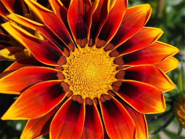Удивительные растения - фото, картинки, красивые, интересные 14