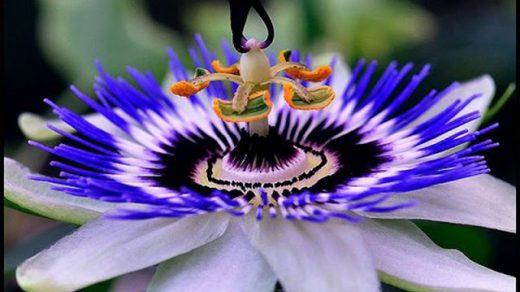 Удивительные растения - фото, картинки, красивые, интересные 5