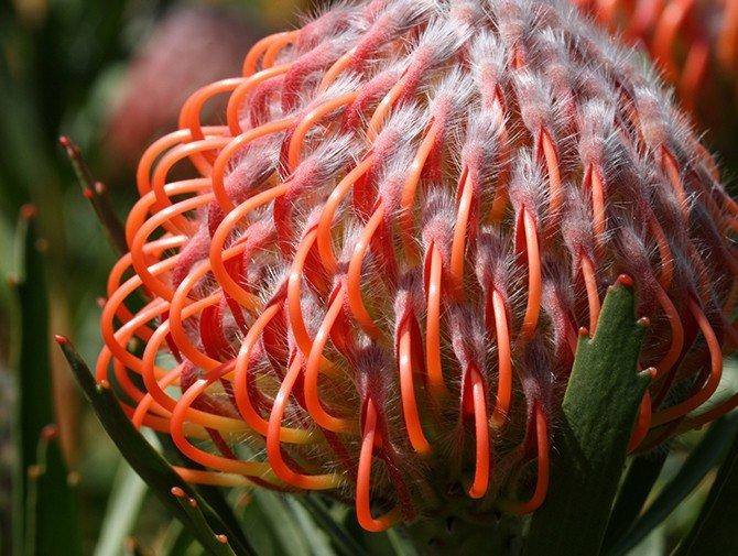 Удивительные растения - фото, картинки, красивые, интересные 9