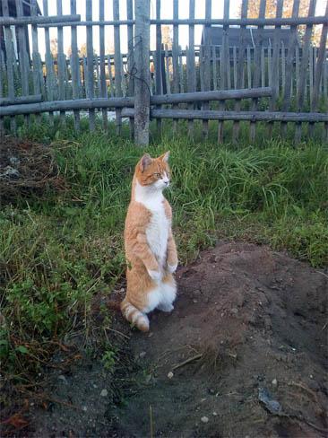 Фото самых смешных котят, прикольные котики - фото и картинки 12