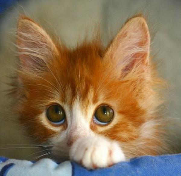 Фото самых смешных котят, прикольные котики - фото и картинки 17
