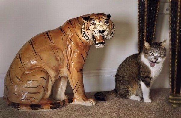 Фото самых смешных котят, прикольные котики - фото и картинки 18