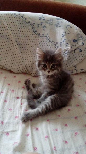 Фото самых смешных котят, прикольные котики - фото и картинки 19