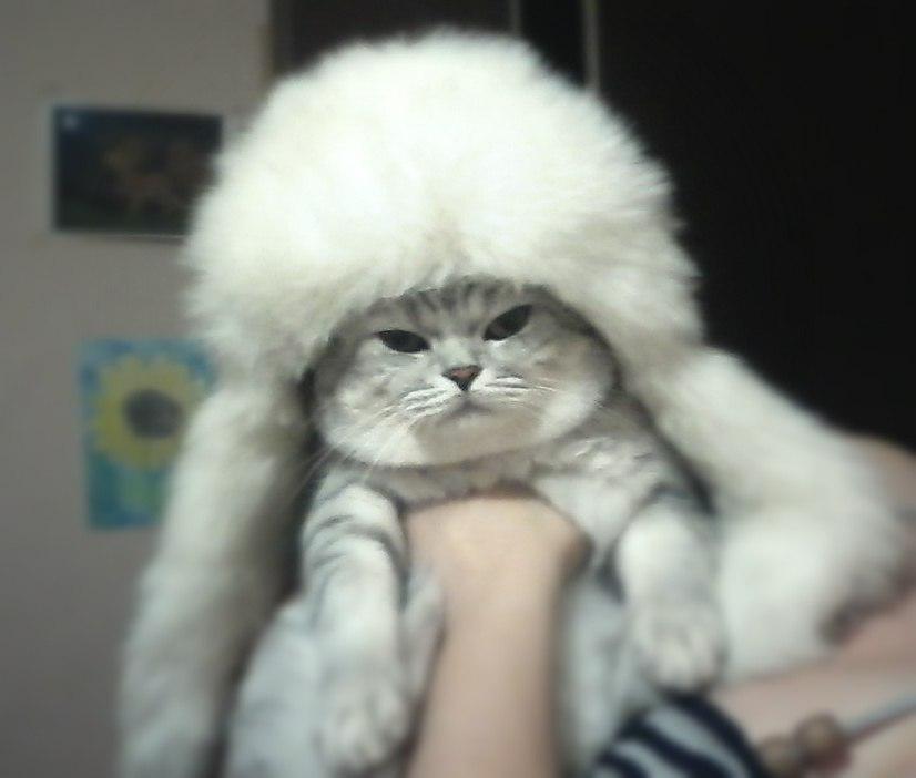 Фото самых смешных котят, прикольные котики - фото и картинки 20
