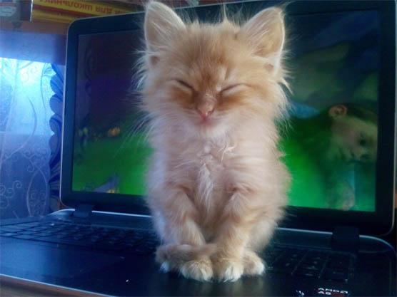 Фото самых смешных котят, прикольные котики - фото и картинки 4