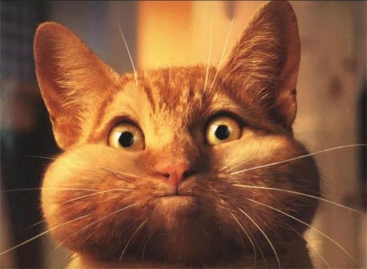 Фото самых смешных котят, прикольные котики - фото и картинки 7