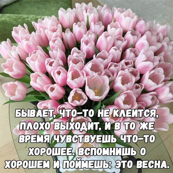 Цитаты про весну - красивые, короткие, удивительные, прикольные 1