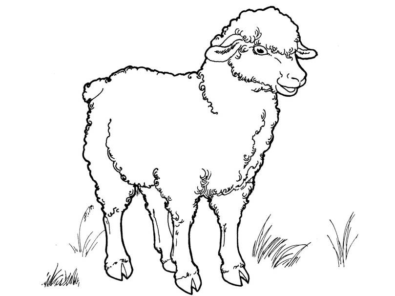 Черно белые картинки животных для детей - смотреть бесплатно 5