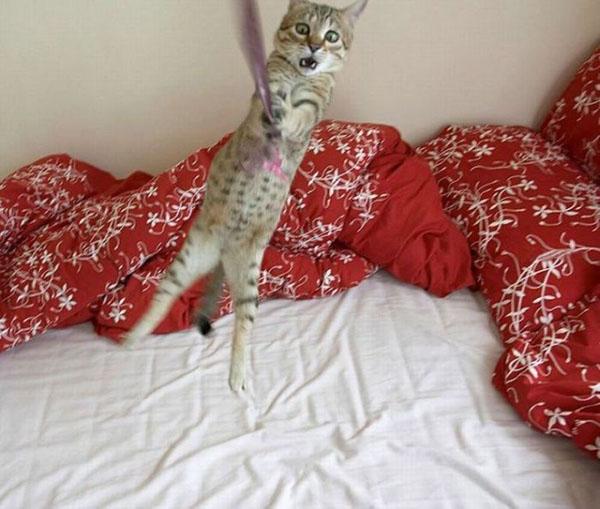 Смешные фото про котов - ржачные, веселые, прикольные 1