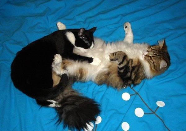 Смешные фото про котов - ржачные, веселые, прикольные 3