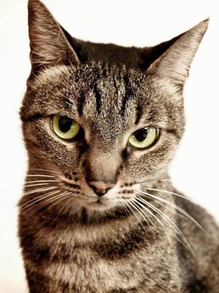 Смешные фото про котов - ржачные, веселые, прикольные 5