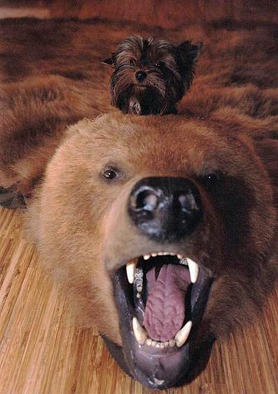 Самые смешные фотки людей и животных - веселые, прикольные 4