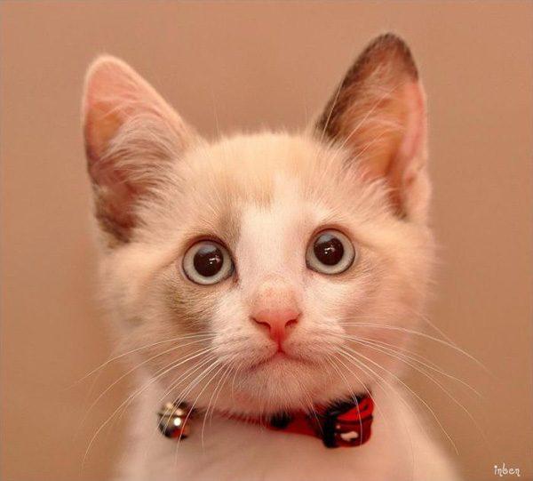 Смешные фото про котов - ржачные, веселые, прикольные 8