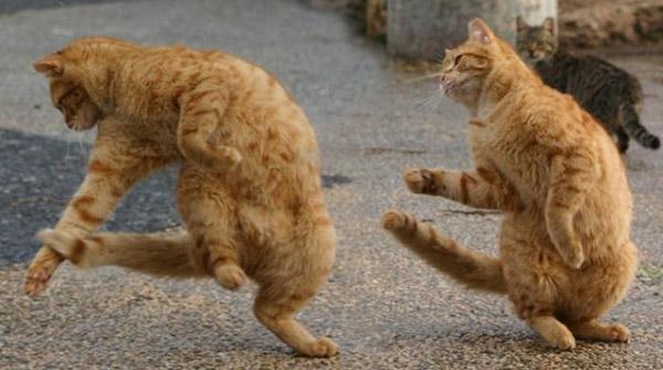 Смешные фото про котов - ржачные, веселые, прикольные 9