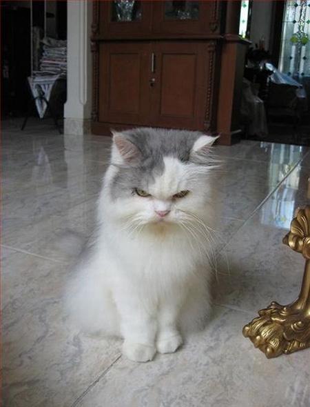 Смешные фото про котов - ржачные, веселые, прикольные 12