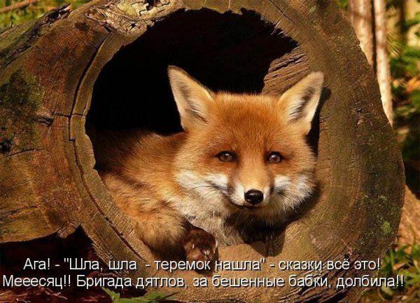 Смотреть смешные картинки про животных с надписями 2