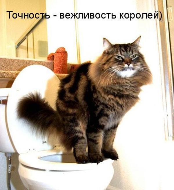 Смотреть смешные картинки про животных с надписями 3