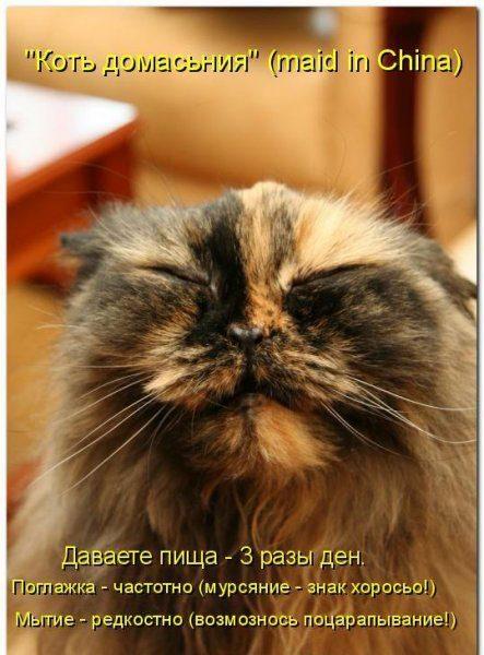 Смотреть смешные картинки про животных с надписями 5