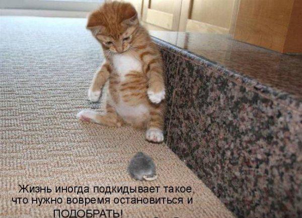 Смотреть смешные картинки про животных с надписями 6