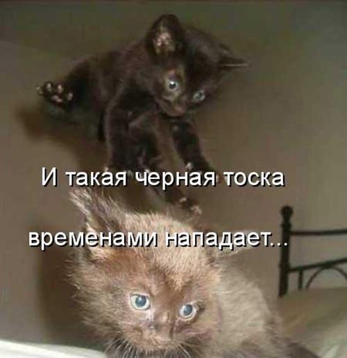 Смотреть смешные картинки про животных с надписями 8