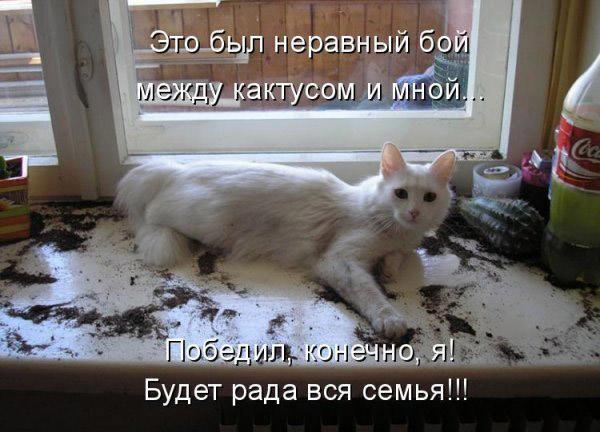 Смотреть смешные картинки про животных с надписями 11