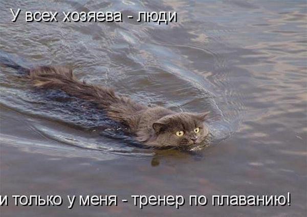 Смотреть смешные картинки про животных с надписями 15