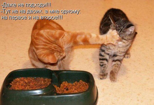 Смотреть смешные картинки про животных с надписями 17