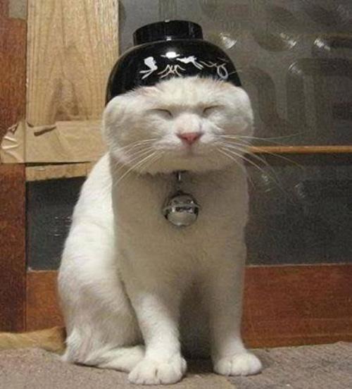 Смешные коты - фото, картинки, ржачные, веселые 5