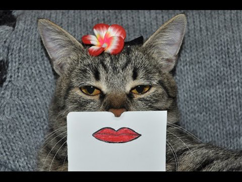 Смешные фото про котов - ржачные, веселые, прикольные 16