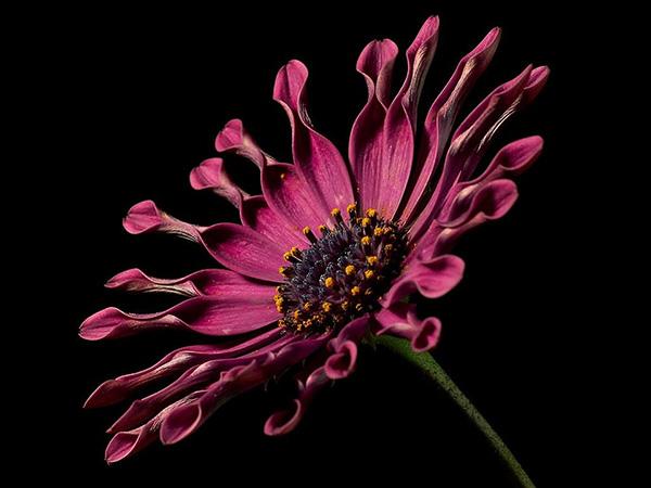 Красивые и прикольные цветы фото, картинки, смотреть бесплатно 1