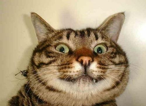 Смешные коты - фото, картинки, ржачные, веселые 7