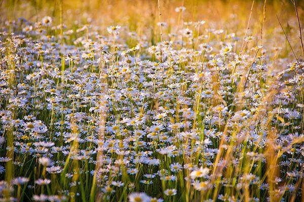 Красивые и прикольные цветы фото, картинки, смотреть бесплатно 2