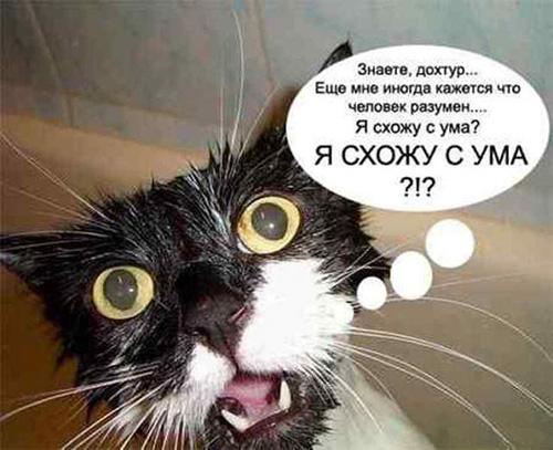 Смешные коты - фото, картинки, ржачные, веселые 8