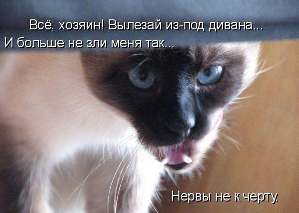 Прикольные картинки с животными с надписями - ржачные, веселые, смешные 2