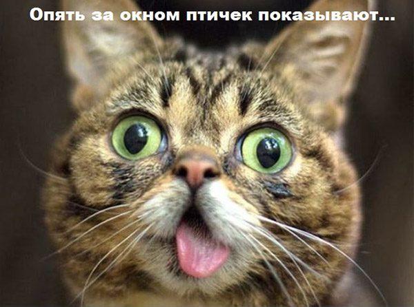 Прикольные картинки с животными с надписями - ржачные, веселые, смешные 7